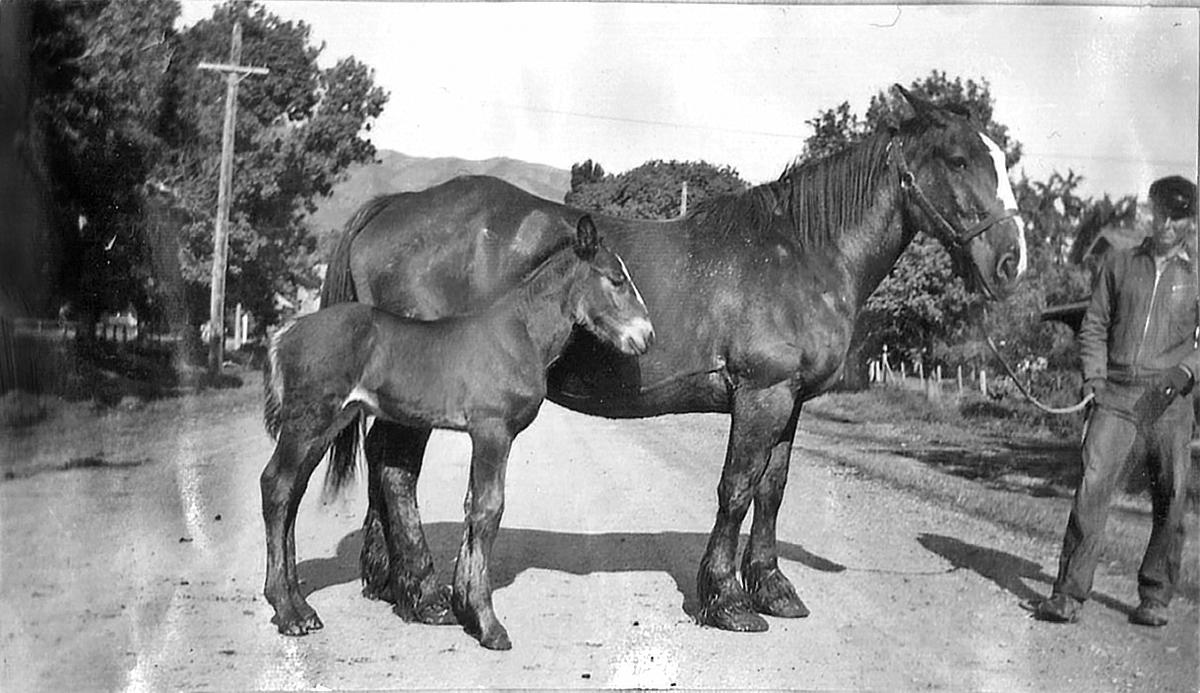 SCAFOLK067-DNO-0062_GHJR020-5a-Joseph-Barrett-Richards-with-horse-Maud-her-co.jpg