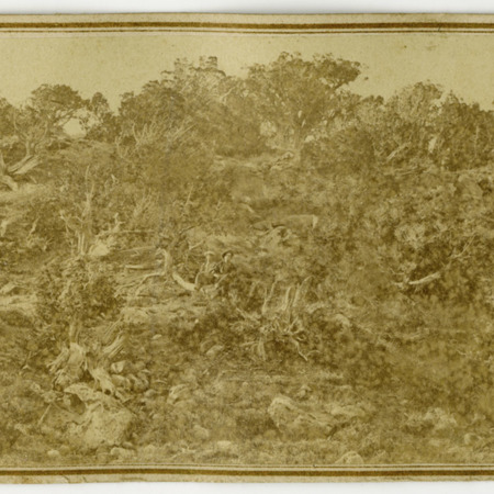 """""""Pioneer Hollow,"""" two people sitting center of cedar trees"""