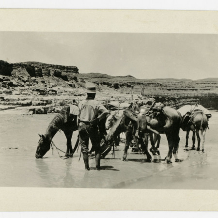 Dolph Andrus with team of horses and burros