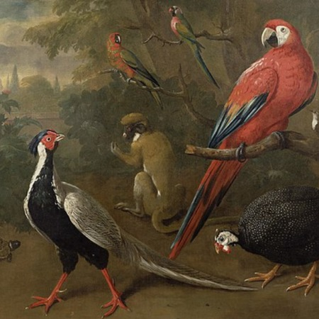 Pheasant, Macaw, Monkey, Parrots and Tortoise