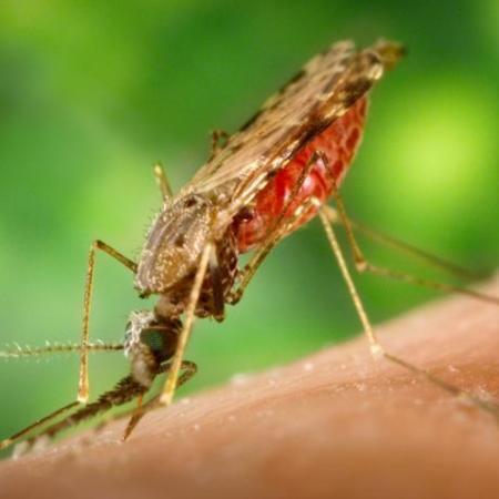 Bushnell_malaria_003.jpg