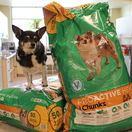 Dog with bags of dog food