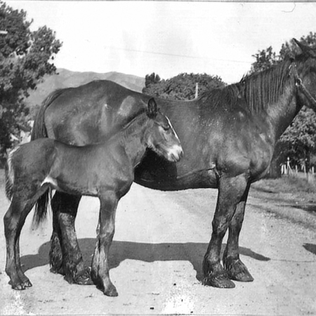 SCAFOLK067-DNO-0062_GHJR020-5a-Joseph-Barrett-Richards-with-horse-Maud-her-co.jpg