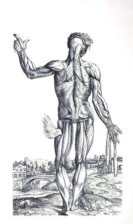 Muscle man 7
