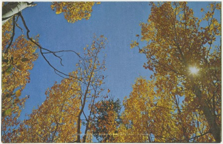 Mountain Equipment, Inc., fall trees, undated