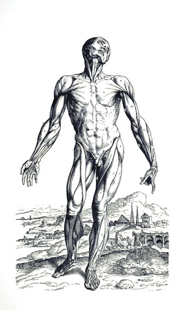 Muscle man 1