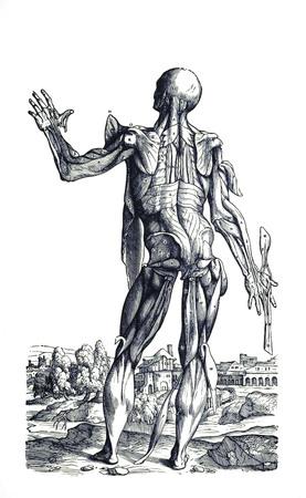 Muscle man 8