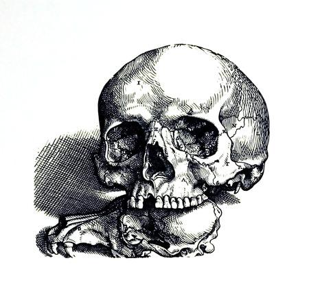 Skull 2, a