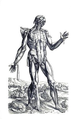 Muscle man 3