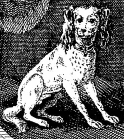 A portrait of the Francis Coventry's fictional lapdog Pompey, the Little (1751)