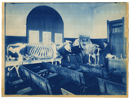 1896-1916 Agricultural College of Utah Cyanotype 5